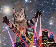 tabby attacks plays with city - Cat memes - kitty cat humor funny joke gato…
