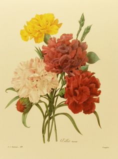 Vintage Carnation Bouquet Redoute Flower Print, Botanical Illustration (For You To Frame) 9 x 12 Book Plate No. 89. $5.00, via Etsy.