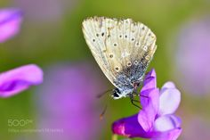Butterfly by _oz_. @go4fotos