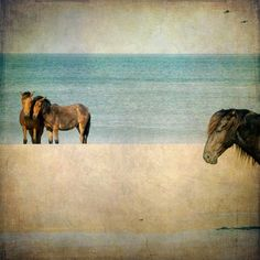 Horse Photograph, wild horses Corolla beach Currituck ocean sand teal brown 8x8 - Wild Ones for $30.00 at etsy.com