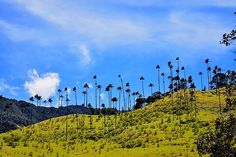 48 Hours in Salento, Colombia Silhouettes, Colombia Travel, Cheap Travel, Free Pictures, Vacation Trips, Travel Style, Palm Trees, Monument Valley, Travel Inspiration