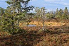 Riisitunturi national park, Posio, Finland by Petri Tuovinen