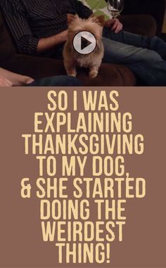 So I was Explaining Thanksgiving To My Dog & She Started Doing The Weirdest Thing!