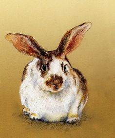 """pastel bunny"" pastel drawing by Rachesimages."