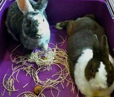 This is a GREAT article (with really good links, too) for anyone interested in having a pet rabbit!!!