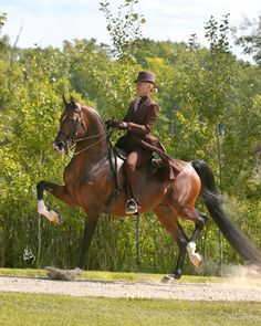 Magnifire  pretty Arabian English horse