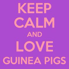 I do love guinea pigs