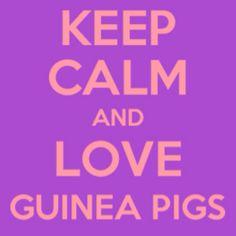 I do love guinea pigs