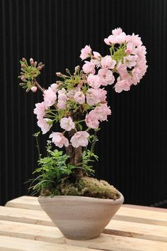 cherry blossom bonsai,  Go To to get more Gossip #Bonsai #Bonsai art| http://bonsai-art.lemoncoin.org