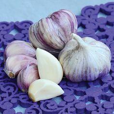 Purple Glazer Garlic Organic-yep, those are going into the garden this fall Garden Seeds, Garden Plants, Funky Fruit, Tree Id, Perennial Vegetables, Baked Garlic, Exotic Fruit, Fruit And Veg, Garden Planning