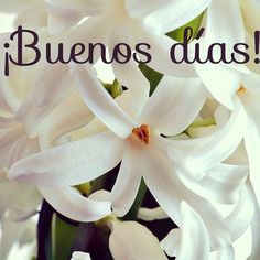 ¡Vamos a por el ecuador de la semana! ¡Feliz Miércoles!  #ideassoneventos #blog #bloglovin #organizacióndeventos #comunicación #protocolo #imagenpersonal #bienestarybelleza #decoración #inspiración #bodas #buenosdías #goodmorning #miércoles #wednesday #felizdía #flores #flowers #blanco