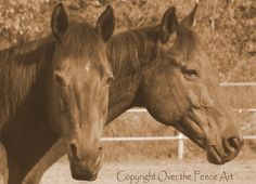 Equine Photography 8x10 Print Quarter Horse by overthefenceart, $25.00
