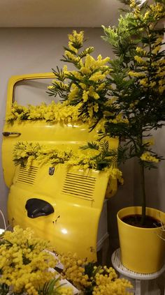 festa della donna  mimosa 500fiat