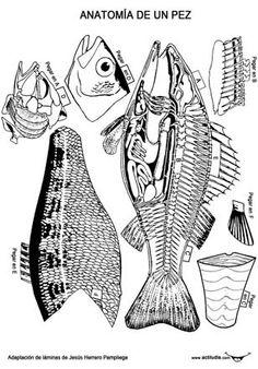 Recortables anatomía vertebrados Science Biology, Life Science, Science Nature, Science Crafts, Science Projects, Colegio Ideas, Teacher Page, Festival Posters, Animal Crafts