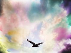 Vuelo en libertad #vuelo #cielo #colores #libertad #pajaro #paisaje #Ecuador #naturaleza   #sky #photo #fotografia