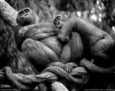 National+Geographic+Zoo+Animals | ... Photo, Animals Wallpaper – National Geographic Photo of the Day