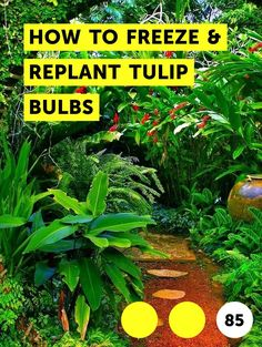 How to Repot a Majesty Palm Plant. In its natural habitat, the majesty palm (Ravenea rivularis) reaches roughly 20 feet in height. List Of Vegetables, Growing Vegetables, Veggies, Growing Tomatoes, Growing Herbs, Fast Growing, Fresh Vegetables, Majesty Palm, Mixed Border