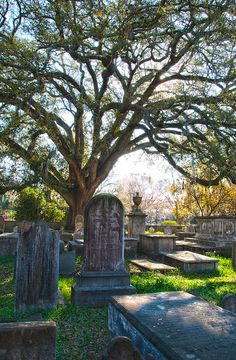 St. Philips Cemetery, Charleston, SC by Paul Coffin, via Flickr