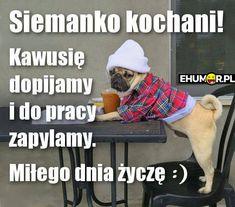 Siemanko kochani! Kawusie dopijamy i do pracy zapylamy. Miłego dnia życzę. Weekend Humor, Ok Boomer, Reaction Pictures, Motto, Good Morning, My Love, Memes, Funny, Good Morning Funny