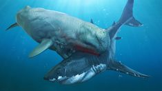 Largest Sea Turtle, Baleen Whales, Big Shark, Megalodon Shark, Facts For Kids, Wale, Great White Shark, Prehistoric Animals, Crocodiles