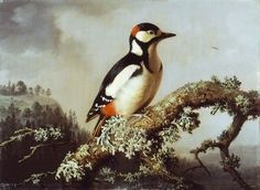 PaintingDb view of Käpytikka by Wright, Ferdinand von. Ferdinand, Science And Nature, Finland, Dresden, Birds, Spotted Woodpecker, Prints, Inspiring Art, Animals