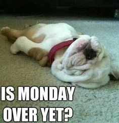 50 Funny Monday Quotes - Yes it's Monday again! Monday's can be rough but we have 50 funny Happy Monday quotes to brigh - Monday Humor Quotes, Frases Humor, Funny Quotes, Wednesday Humor, Dog Quotes, Animal Quotes, Funny Memes, Funny Animal Pictures, Cute Pictures