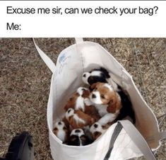 Are you looking for dog memes or other animal memes photos? Here we share 40 funny dog memes photos that make your day more cool, entertaining and awesome. Funny Dog Memes, Funny Animal Memes, Cute Funny Animals, Funny Animal Pictures, Cute Baby Animals, Funny Cute, Funny Dogs, Cat And Dog Memes, Funny Humour