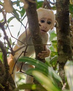 We loved watching the monkeys play in Sri Lanka! #WanderlustLama #SriLankaTravel #Monkeys #Adventure #FeedingMonkeys #Travel #SriLankaDestinations #SriLankaPointsofInterest #SriLankaHotels #SriLankaBeaches #SriLankaWeather #SriLankaHolidays #SriLankaAir