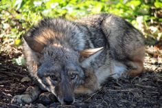 A coyote hunting contest urging teams to kill as many animals as they could to win a cash prize was recently held in Nevada. Sign this petition and demand a ban against this barbaric form of entertainment.