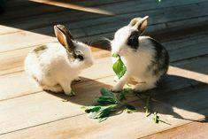 rabbit, cute, and animal εικόνα