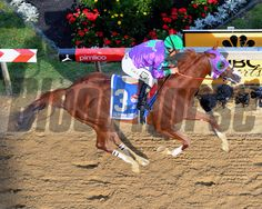 California Chrome with Victor Espinoza up win the Preakness at Pimlico on May 17, 2014. Photo By: Chad B. Harmon