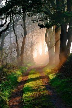 sunlit path through the woods