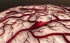 Если кровоток в сосудах медленный, происходит кислородное голодание тканей организма. Также так развиваются риски образования тромбов. Поэтому следует включить в рацион продукты, которые разжижают кровь. Предлагаем вашему вниманию целительные рецепты домашних снадобий. Продукты, разжижающие кровь Лучше всего разжижает кровь аспирин. Однако медикамент вызывает побочные эффекты, как-то возможное образование язв и другие. Микрочастицы аспирина способны въедаться...