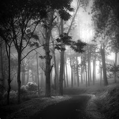 Deep Forest, photography by Hengki Koentjoro