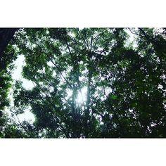 【don_key141】さんのInstagramをピンしています。 《森や空に包まれて心がホッとする #太陽 #森 #木 #森林 #木の葉  #空 #光 #canon #一眼レフ #ファインダー越しの私の世界  #写真撮ってる人と繋がりたい  #写真好きな人と繋がりたい  #l4l  #f4f》