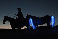 Luces nocturnas para caballos