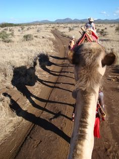 Come and join us on a Camel Trek into the wilderness #wanderlust #travel #safari #kenya #adventure