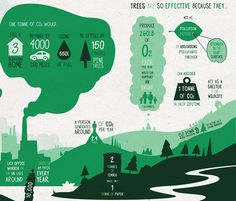 Project Urban Forest Infographic Shows How Trees Effectively Combat Carbon Emissions | Inhabitat - Sustainable Design Innovation, Eco Architecture, Green Building