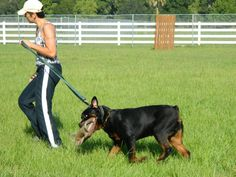Achieve great results in your dog. Proper dog training guidance. Check this out - http://dogtraining-htq7w5v3.canitrustthis.com