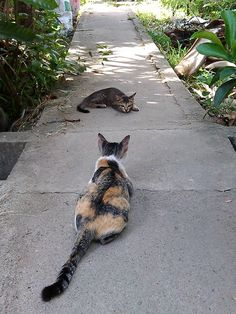 Playful cats. Talking too...