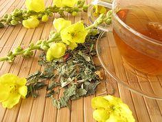 Discover Mullein Tea