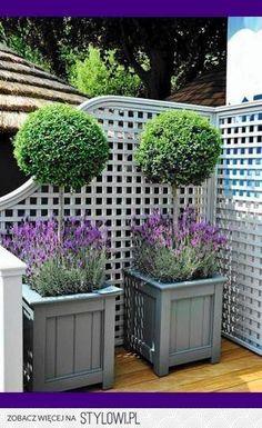 Diy Garden, Garden Cottage, Dream Garden, Garden Planters, Concrete Planters, Small Topiary Garden Ideas, Country Garden Ideas, Small Back Garden Ideas, Front Yard Planters