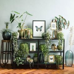 Beautiful House Plants For Decoration.To decorate your home, you must think of Simple and Beautiful House Plants Decor Ideas. Living Room Plants, House Plants Decor, Living Rooms, Decorating Small Spaces, Interior Decorating, Plant Table, Cool Plants, Fake Plants, Green Plants