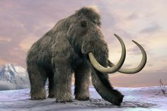 Researchers at Russia's North-Eastern Federal University discovered the remains of an extremely well-preserved mammoth – complete with hair, soft tissue & bone marrow -- in the northeastern province of Yakutia. Thanks to the remarkable condition of the specimen found last summer, in better shape than a human deceased for only six months according to officials, Russian scientists now claim they have enough viable woolly mammoth DNA to clone one of the beasts.