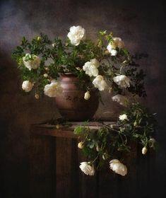 дикие розы.... Фотограф Наталия