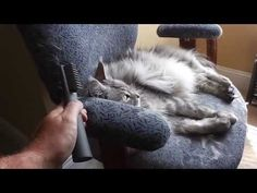 Le Salon Essentials Cat Mat Breaker Unboxing.  This is the best cat fur mat remover on the market today!  It's inexpensive and is comfortable for the cat!  It works by safely getting close to the cat's skin and breaking up the mat enough to remove safely.  This is the best tool for removing mats from a cat's fur!  Please share this video with others and have a PURRfect day!