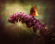 Butterfly bush flower with butterfly dark violet green by dorataya