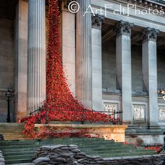 https://flic.kr/p/NCeXNW | 1833-weeping-window | poppy installation St. George's Hall, Liverpool