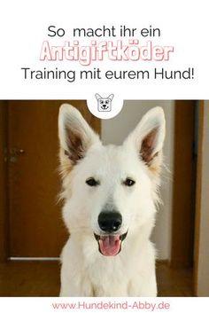Ihr möchtet euren Hund nicht durch Giftköder verlieren? Dann trainiert mit ihm, dass er draußen nichts aufnimmt. Wir zeigen euch, wie das geht.