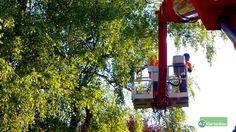 Mit der richtigen Baumpflege den Baum in Form halten. Unsere Fachleute von A-Z Gartenbau in Willich beraten Sie gerne.  #Baumpflege #Baumfällung #Kronenschnitt